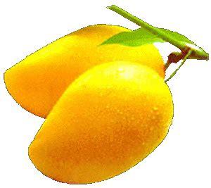 Essay on the mango tree